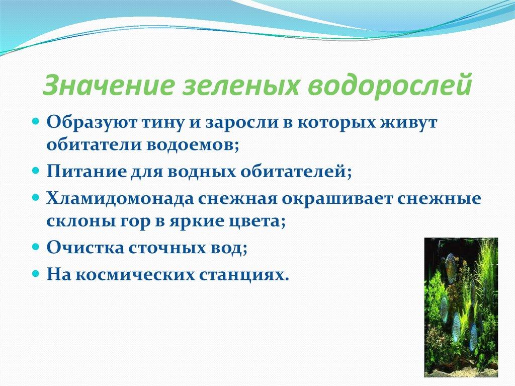 значения водорослей картинка люки, применяемые