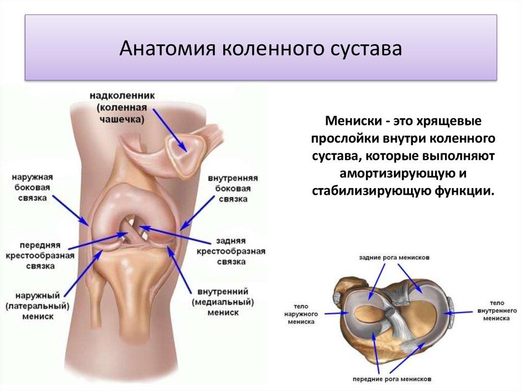 Самый подвижный сустав в опорно-двигате опухоль суставов при крапивнице