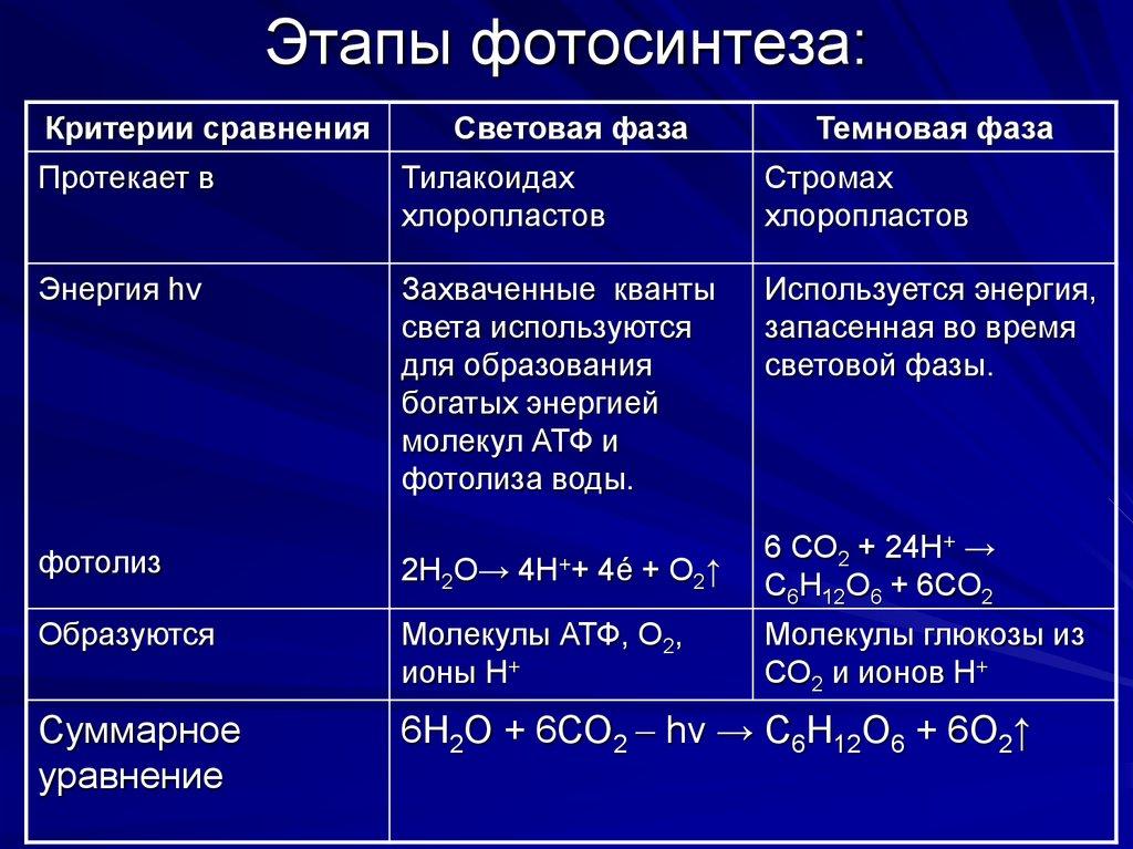 что происходит в темновой фазе фотосинтеза