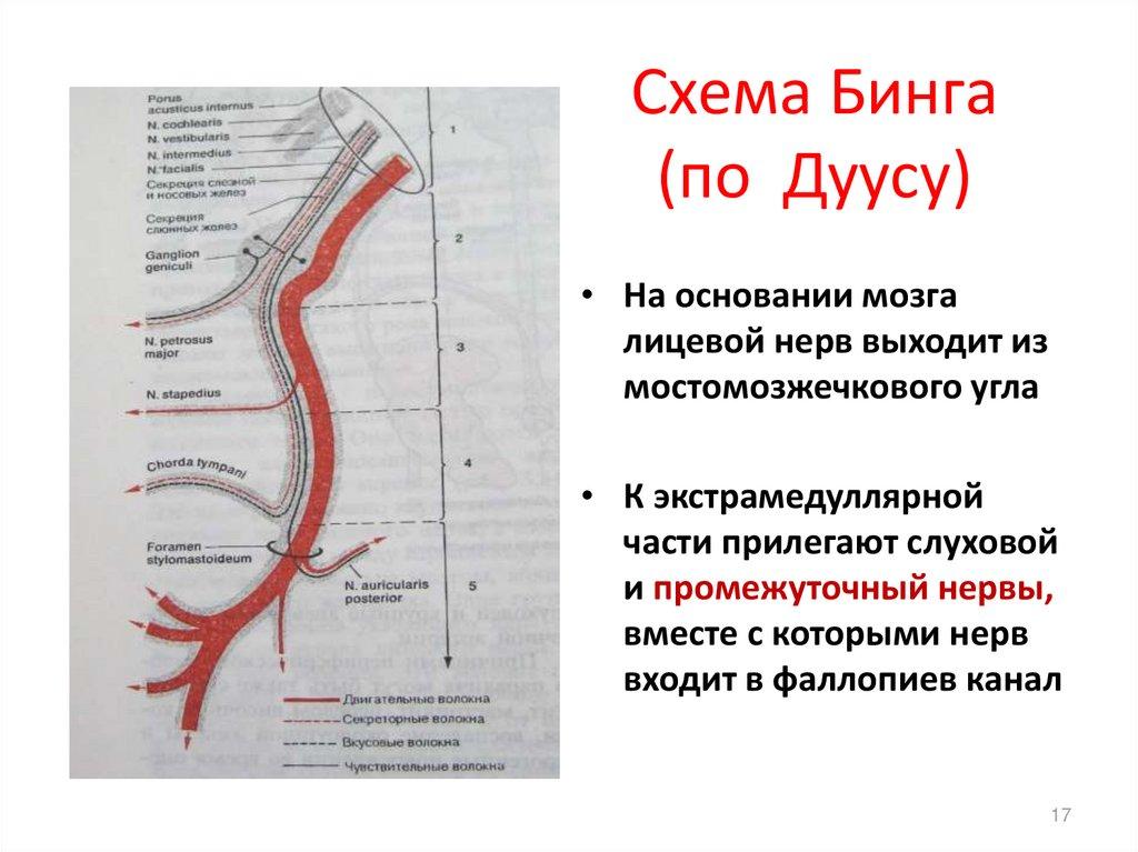 Гипертоническая болезнь: этиология, клиника, патогенез ...