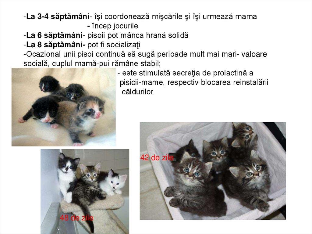 Totul despre sterilizarea pisicilor