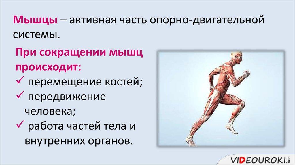 играть онлайн мышцы