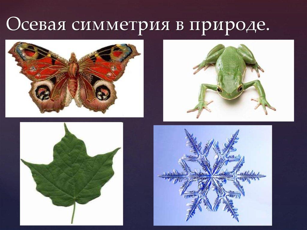 примеры симметрии в природе картинки для связались
