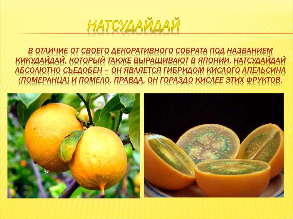 Помело (памела), полезный и вкусный экзотический фрукт — Мир ... | 767x1024