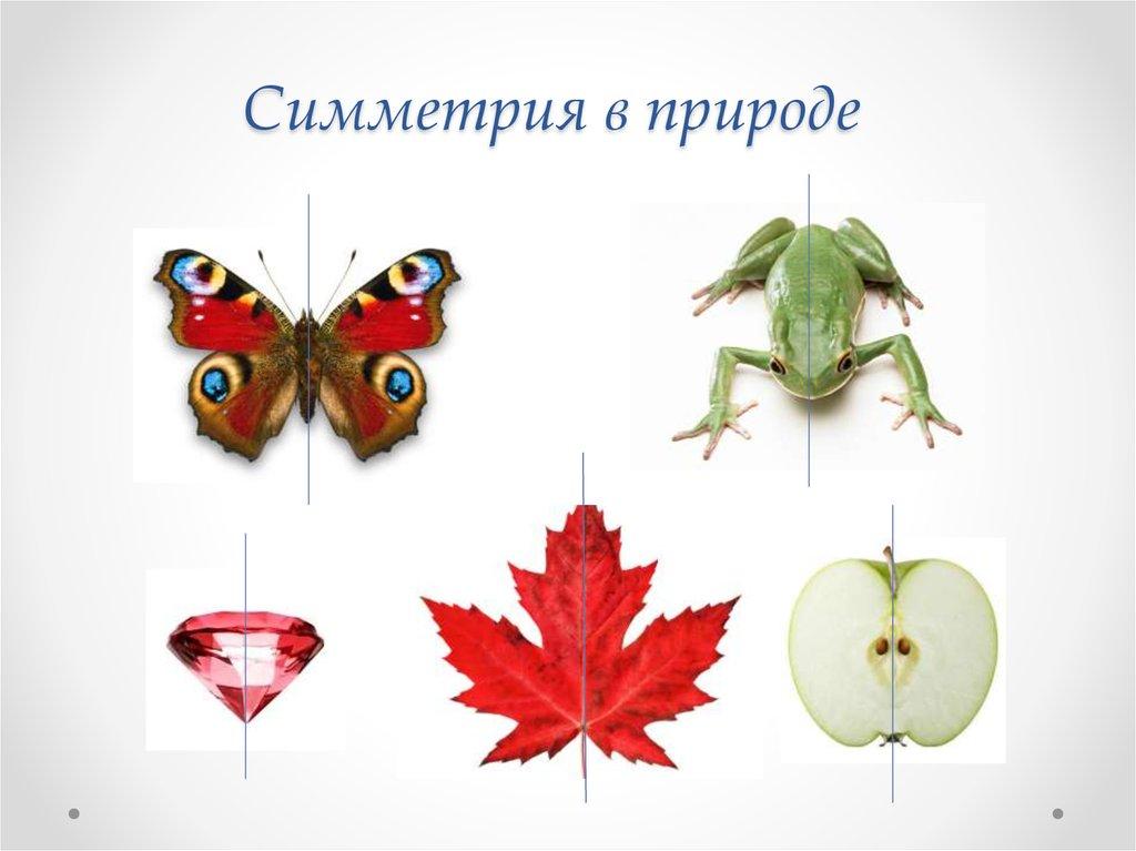 Примеры симметрии в природе картинки для