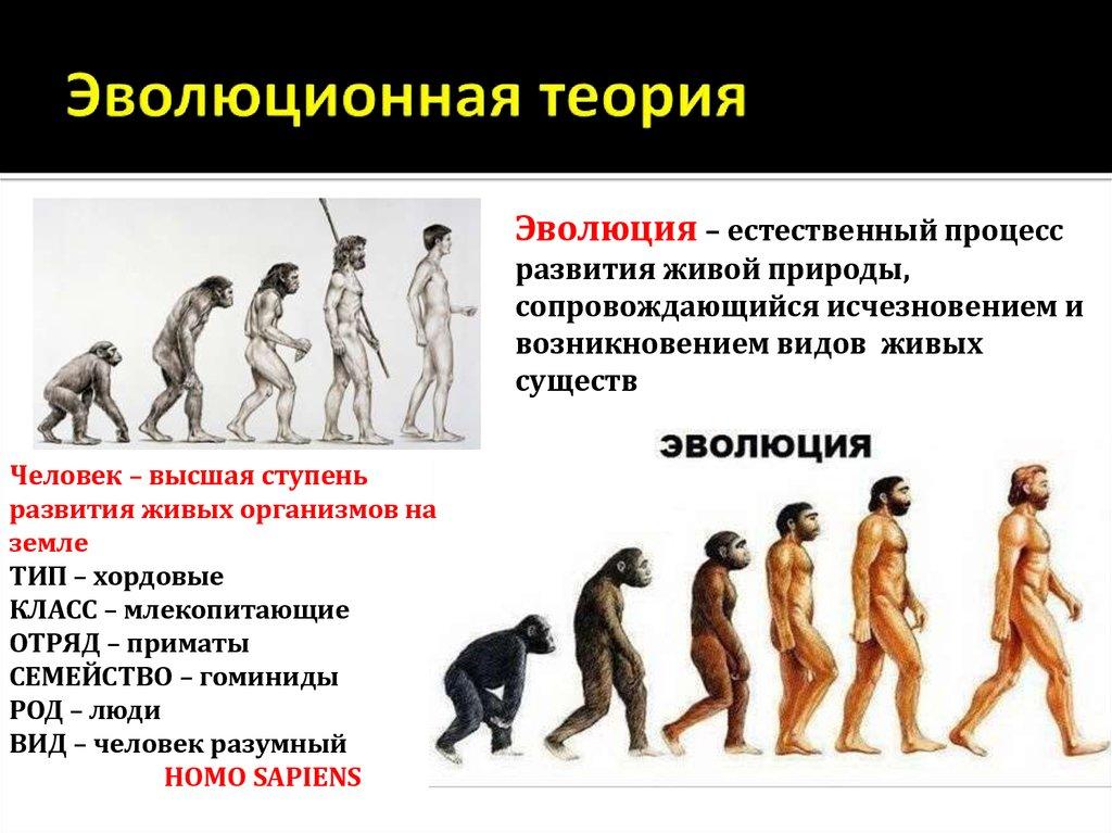 Картинки эволюционное теория