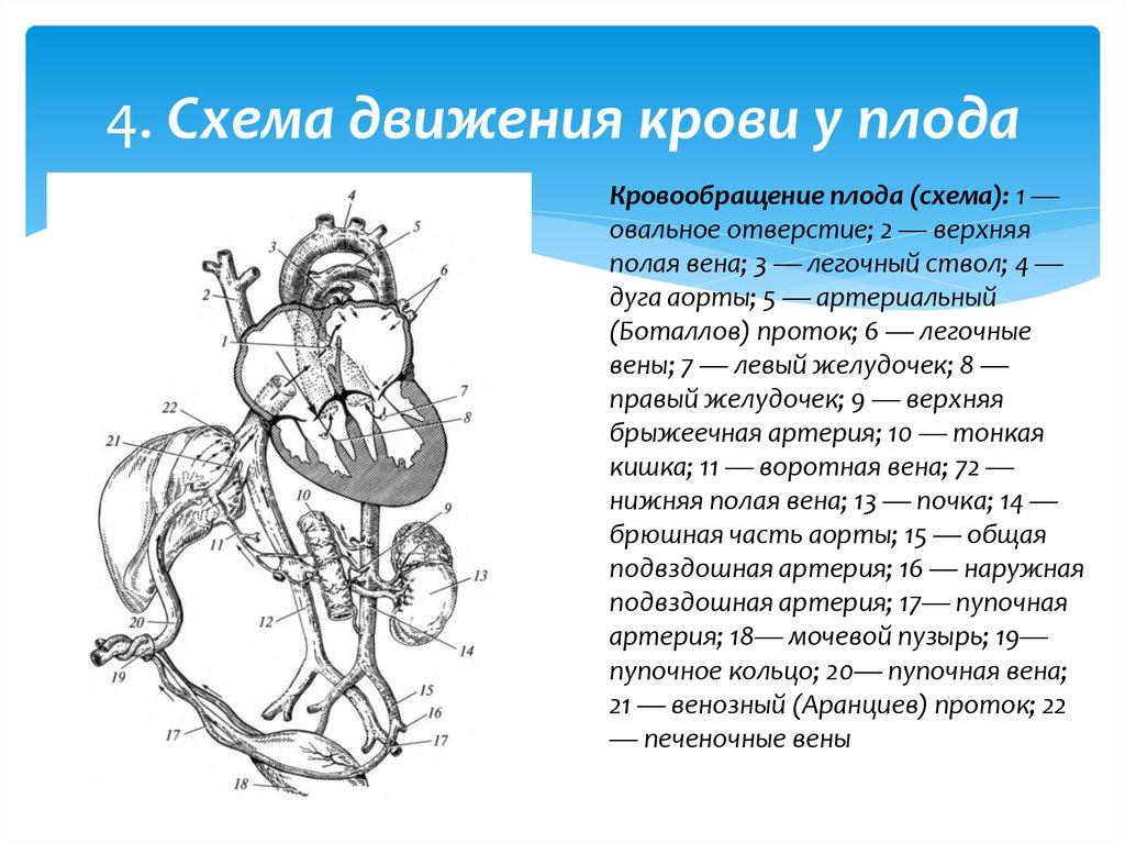 врожденные пороки сердца у детей курсовая работа