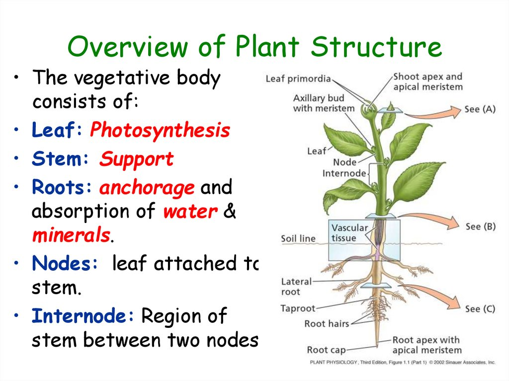 Overview of Plant Structure