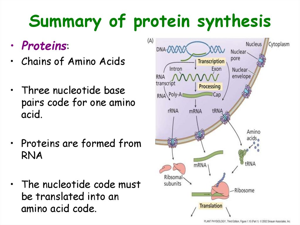 Summary of protein synthesis