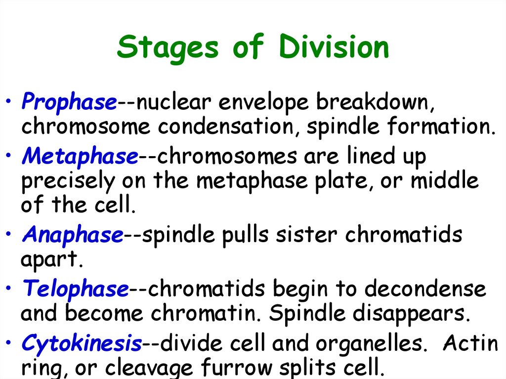 Stages of Division