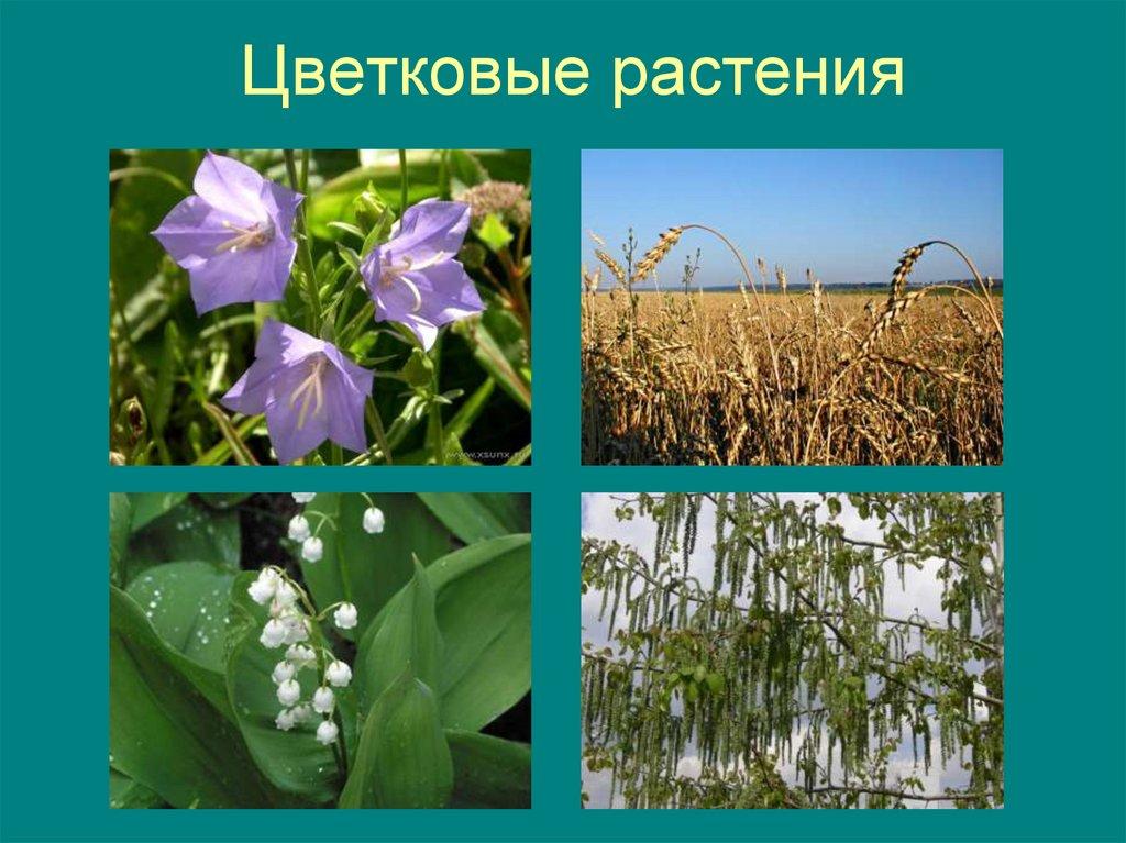 Все цветковые растения названия