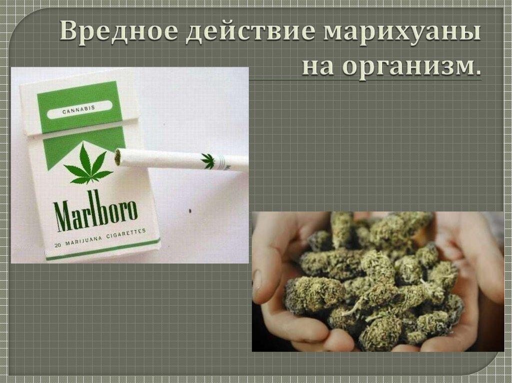 Курение конопли не во вред здоровью конопля курение последствия