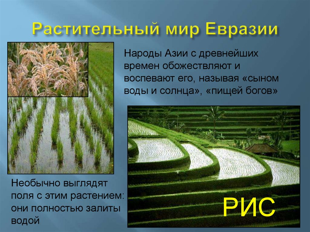 сайт растения евразии фото с названиями обыкновенная растение