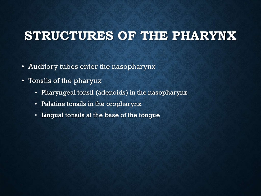 Structures of the Pharynx