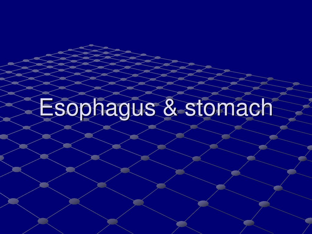 Esophagus & stomach
