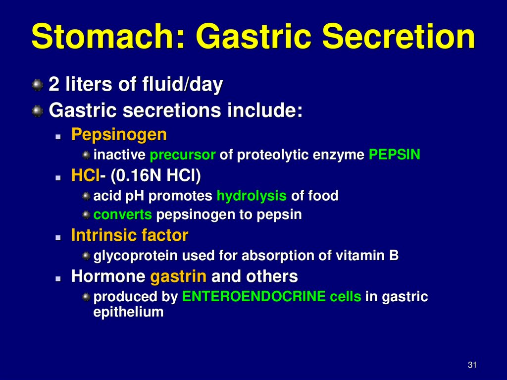 Stomach: Gastric Secretion