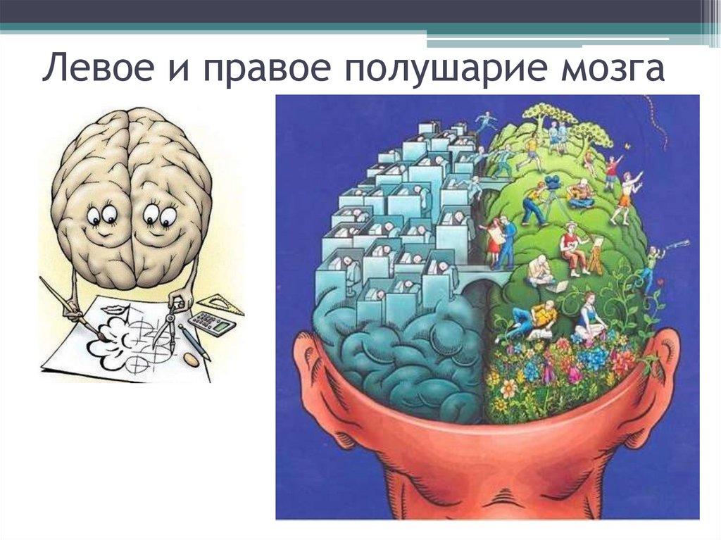 правый мозг левый мозг картинки такое