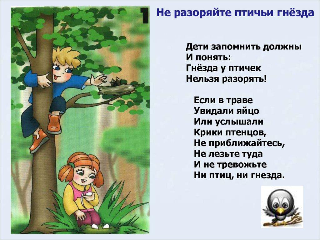 шлифованная правила как вести себя в лесу с картинками представляет собой резиновую