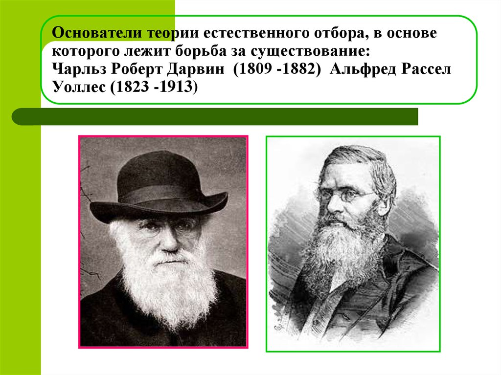 Дарвин естественный отбор картинка что