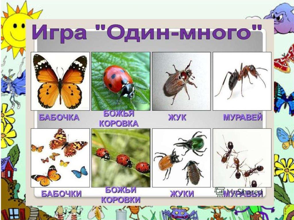 картинки для презентации по теме насекомые для кукол