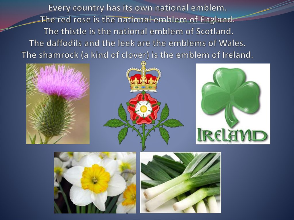 Every country has its own national emblem. The red rose is the national emblem of England. The thistle is the national emblem