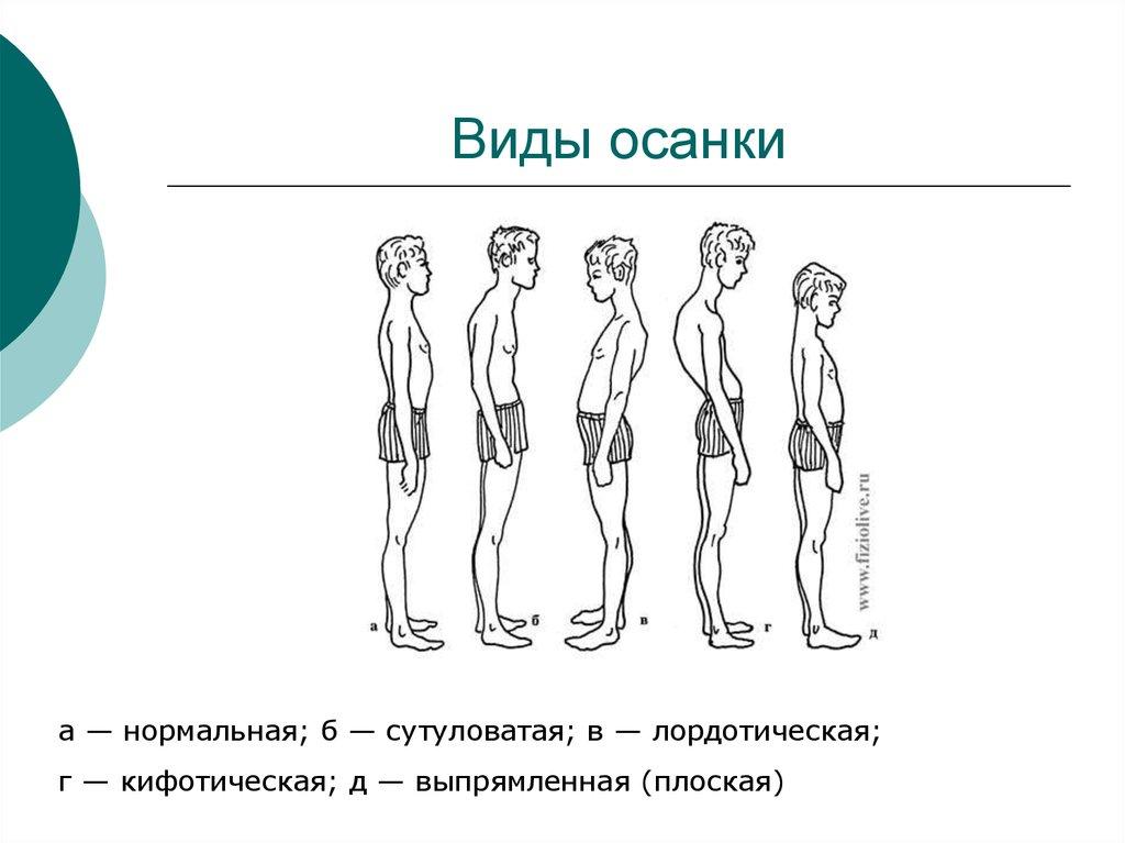 2.1. Методы оценки и коррекции осанки и телосложения | 767x1024