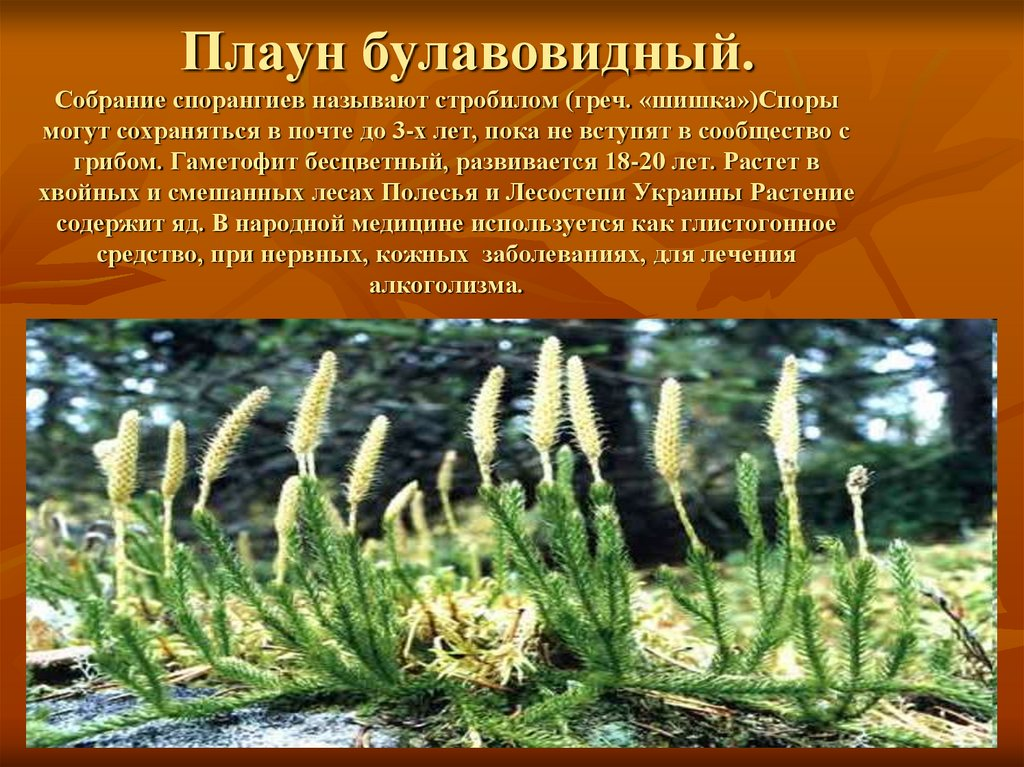 Фото хвощей саратовской области