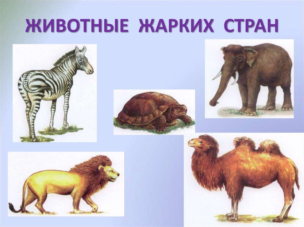 петли тематические картинки животные жарких стран вид стрижки относится
