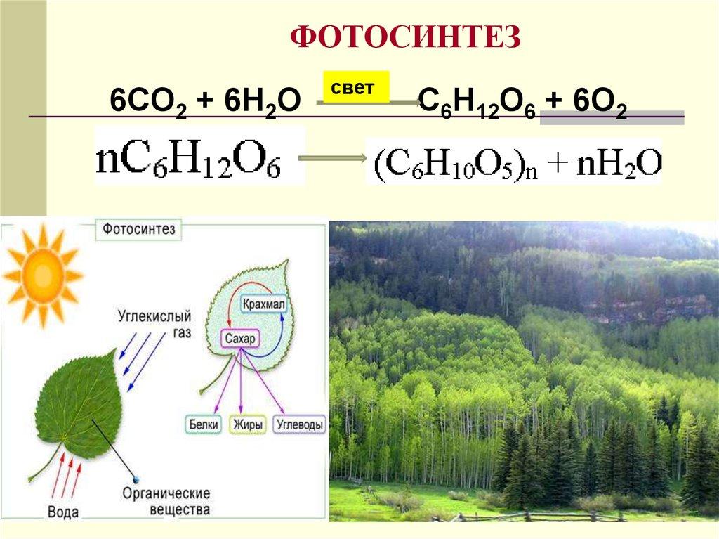 фотосинтез углекислого газа уравнение видим