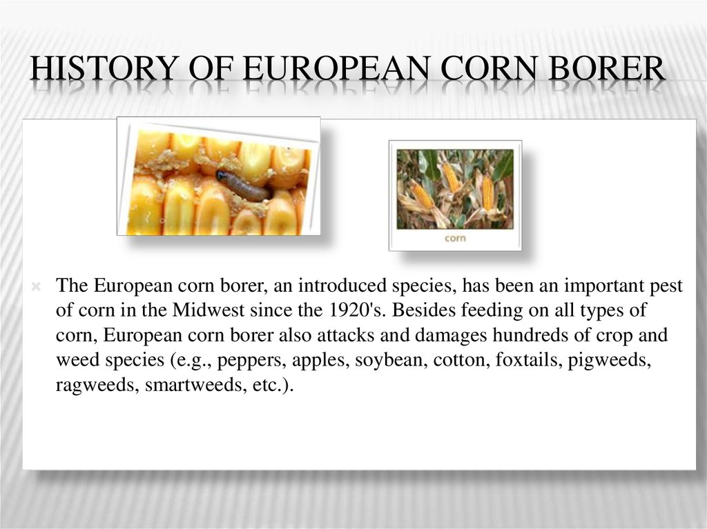 History of european corn borer