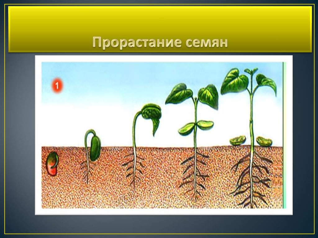 только рост семян картинки жизни