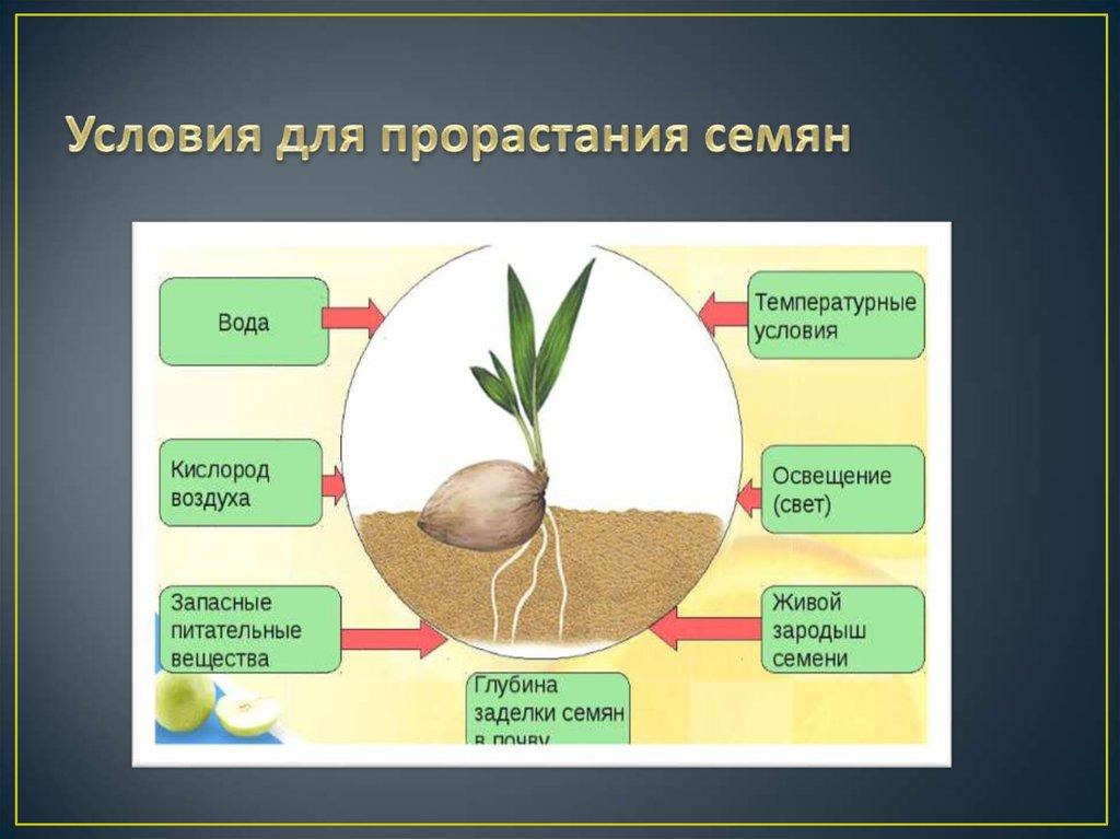нормальной картинки на тему условия прорастания семян ведет страничку