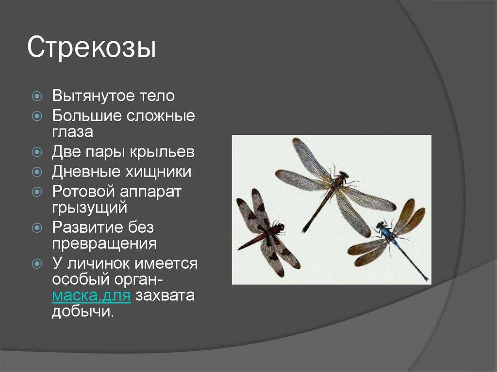 Описание стрекоз с картинками