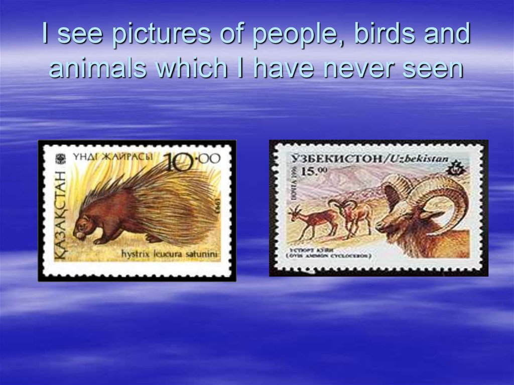 I see pictures of people, birds and animals which I have never seen