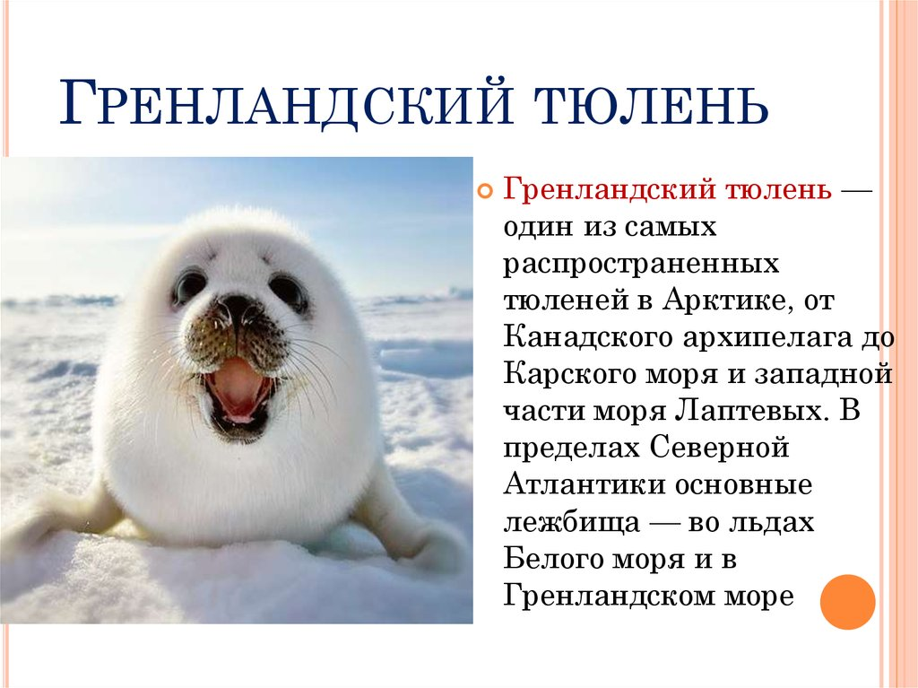 если все о тюленях и их картинки нашем варианте люминофор