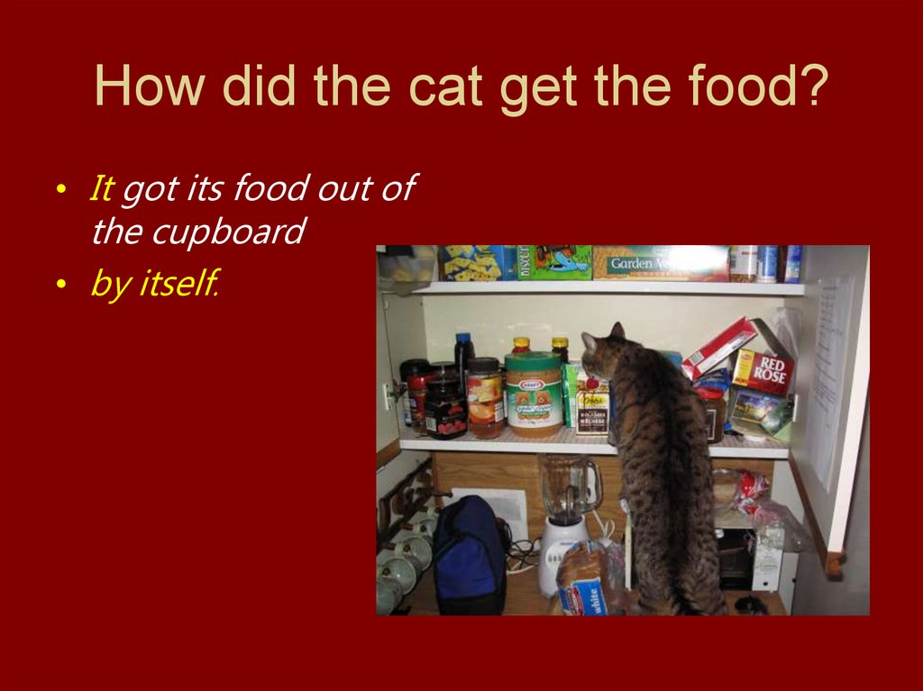 How did the cat get the food?