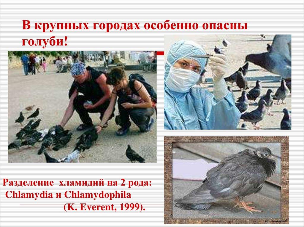 В крупных городах особенно опасны голуби!