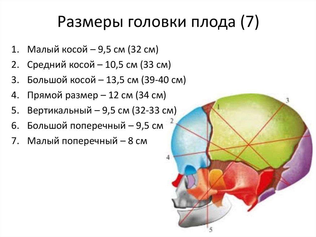 Размеры головки плода картинка