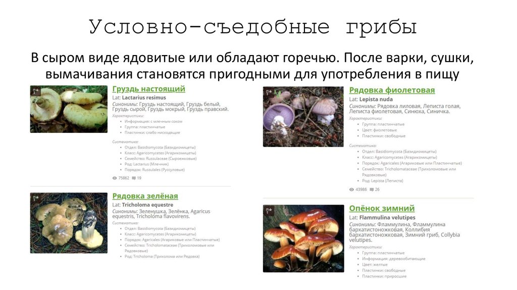 качестве классификация грибов по съедобности с фото теперь