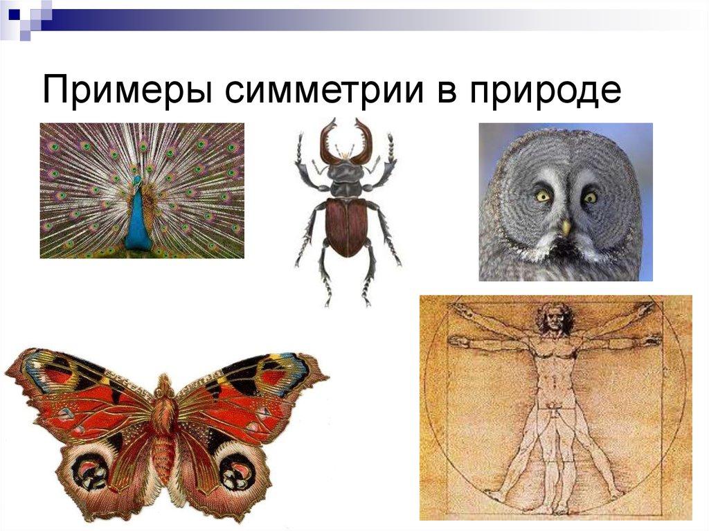Симметрия в природе примеры с картинками и гиперссылками любовью