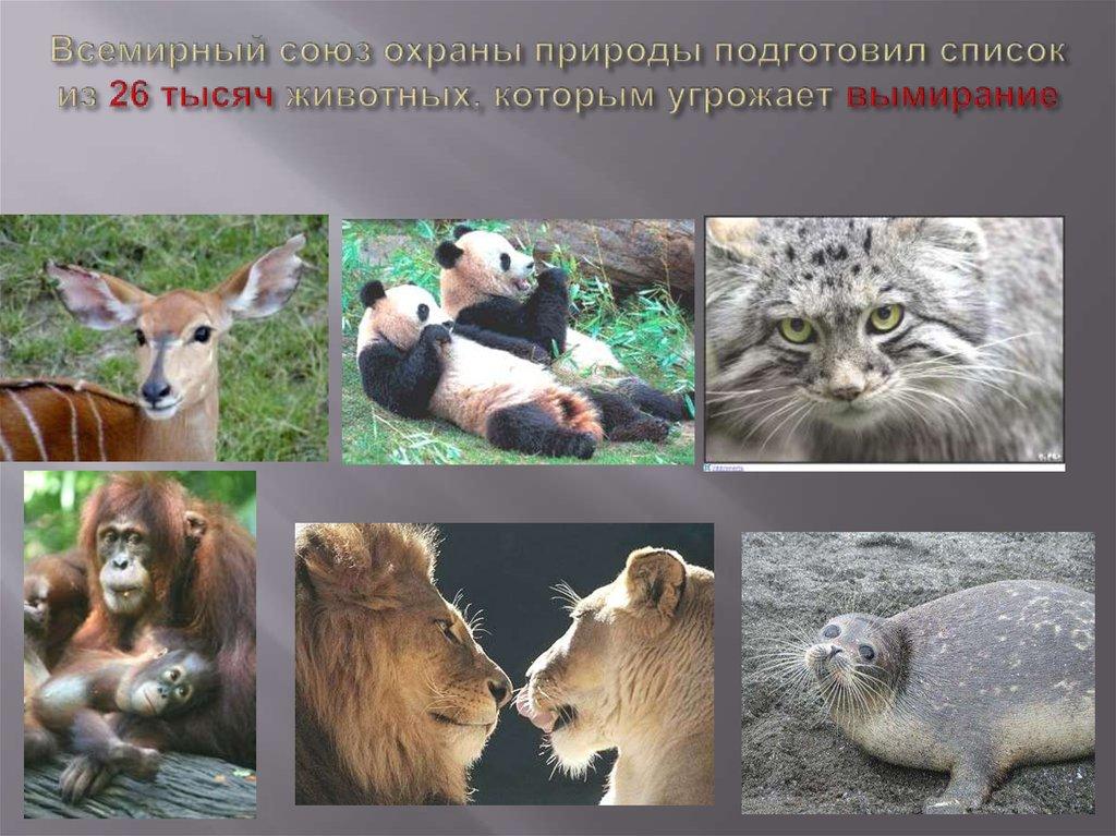 нашем каталоге фото охрана животных метро держаться