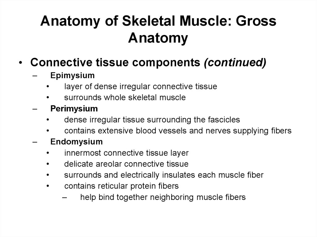 Anatomy of Skeletal Muscle: Gross Anatomy