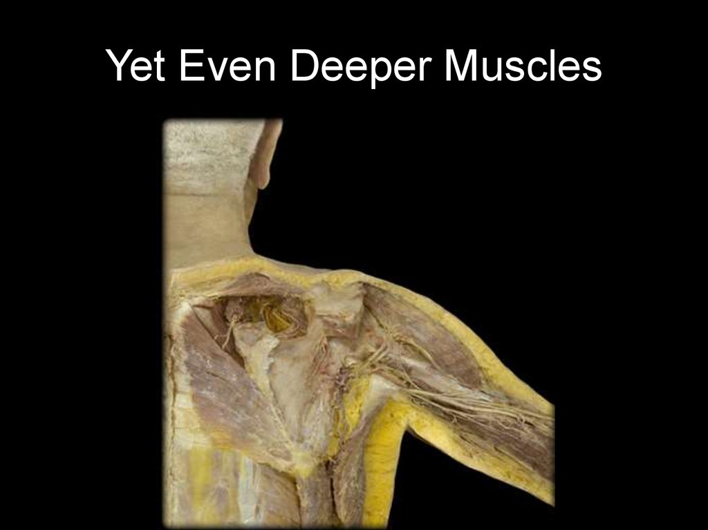 Yet Even Deeper Muscles