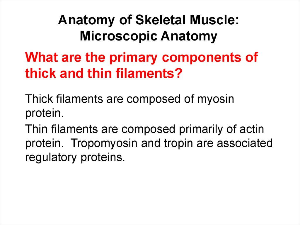 Anatomy of Skeletal Muscle: Microscopic Anatomy