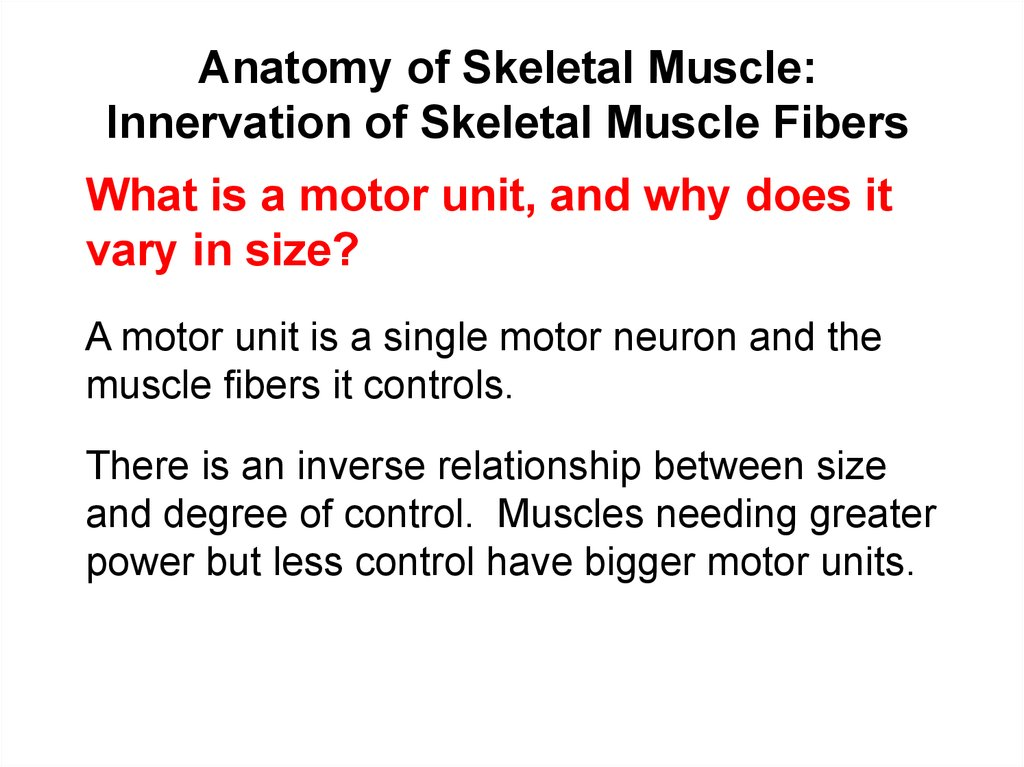 Anatomy of Skeletal Muscle: Innervation of Skeletal Muscle Fibers