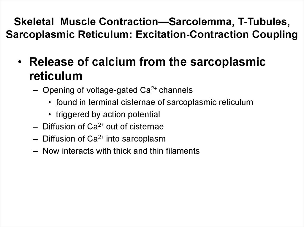 Skeletal Muscle Contraction—Sarcolemma, T-Tubules, Sarcoplasmic Reticulum: Excitation-Contraction Coupling