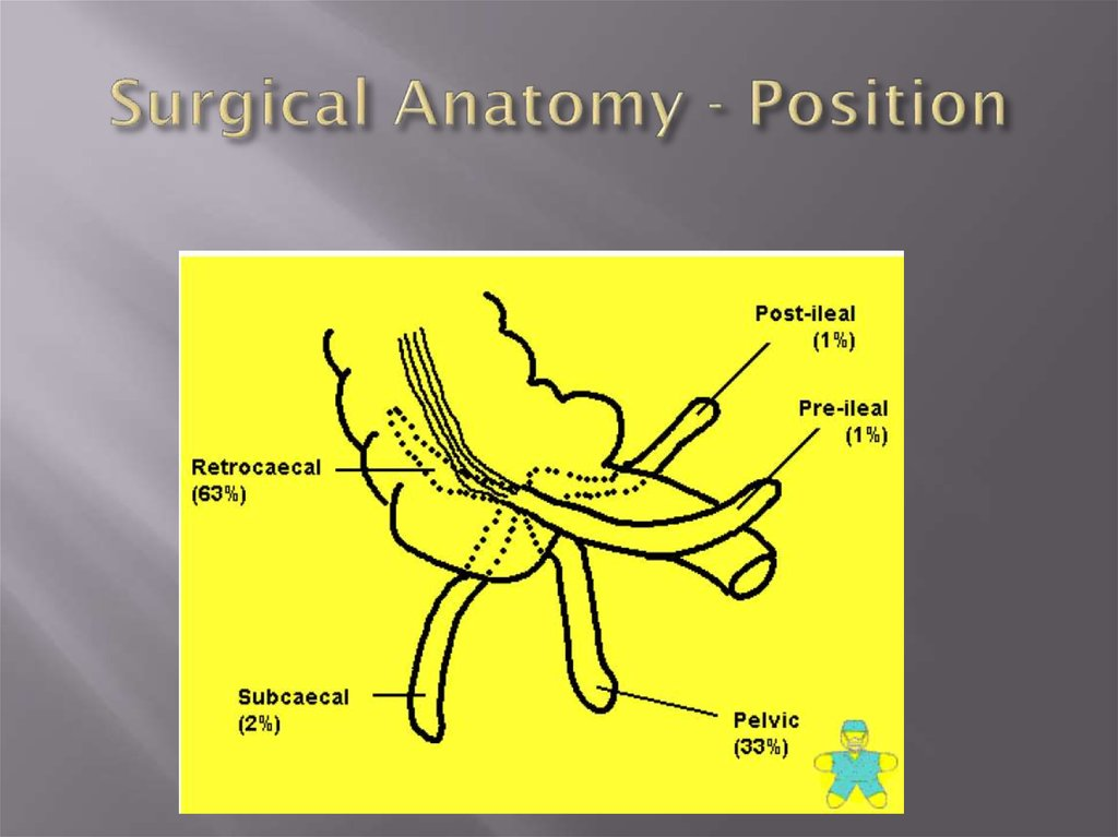 Surgical Anatomy - Position