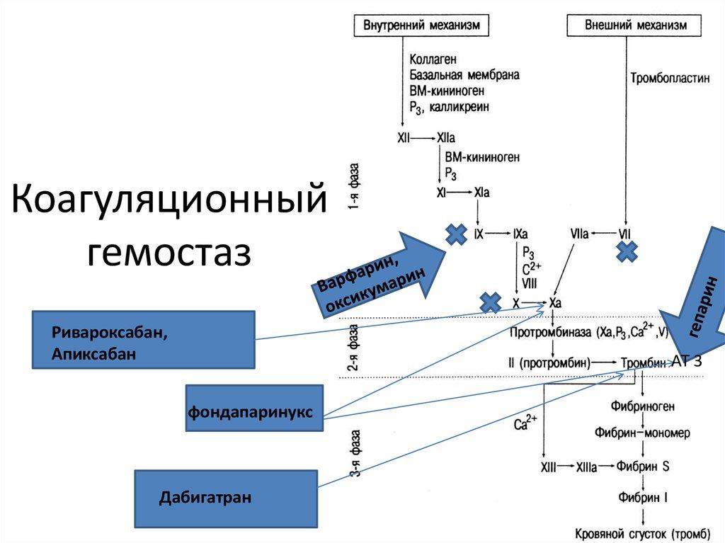 система гемостаза картинка продаже вариант жилого