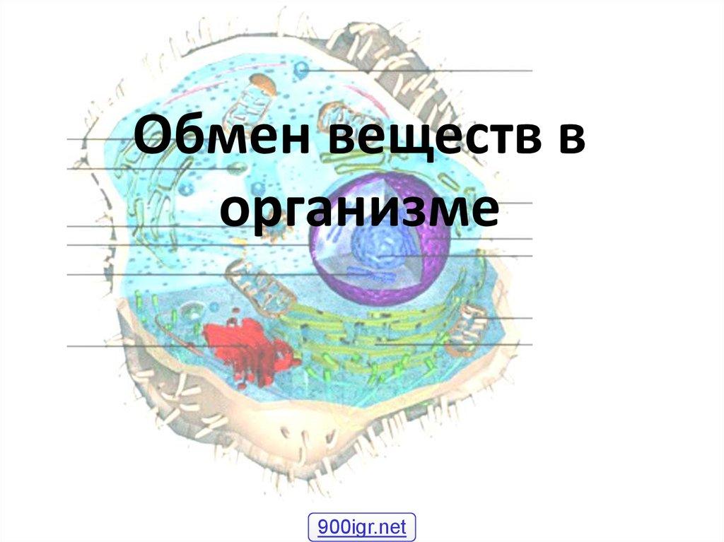 Картинки по обмену веществ в нашем организме