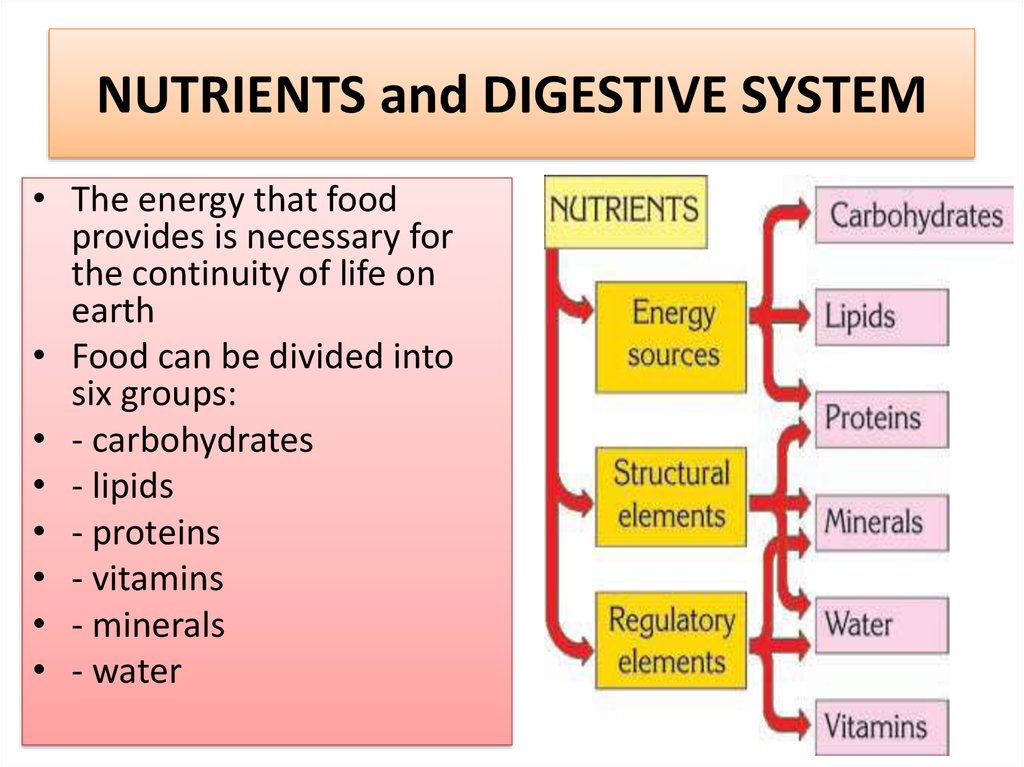 NUTRIENTS and DIGESTIVE SYSTEM